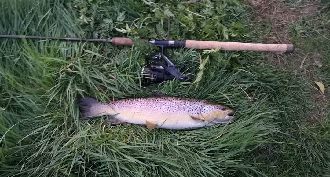 A cracking brownie landed